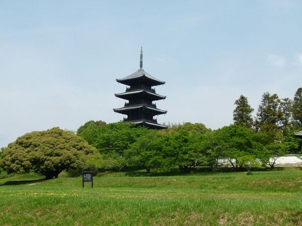 新緑と五重塔.JPG