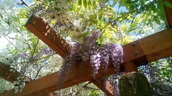 白と紫.jpg