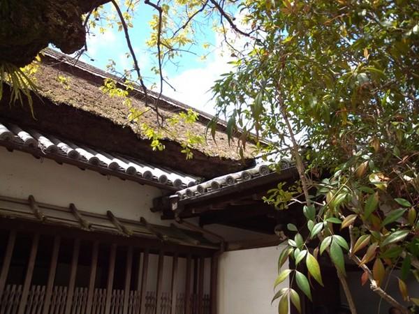 藁葺き屋根.jpg